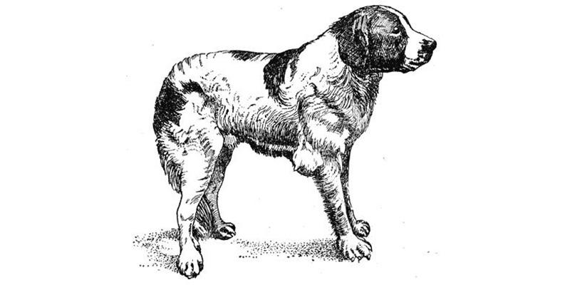 Оценка хирургических методов лечения асептических бурситов у собак