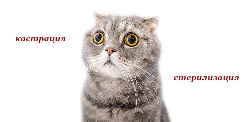 Отличия кастрации от стерилизации кошек и собак