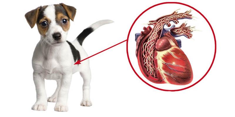 Врожденные дефекты развития сердечно-сосудистой системы